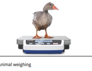 Klinikvægt for mindre dyr: 0-15 kg (DE 35K0.5D)